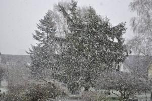 Winterbild Schneefall